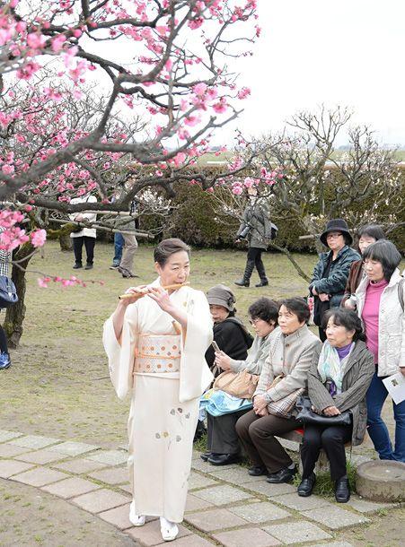 来園者は富山の茶会で満開の香る梅としの笛の演奏を楽しむ。Raiensha wa Toyama no chakai de mankai no kaoru ume to shinobue no ensou wo tanoshimu. Pengunjung taman menikmati bunga prem harum yang mekar penuh dan pertunjukan suling Jepang pada pesta teh di Toyama.