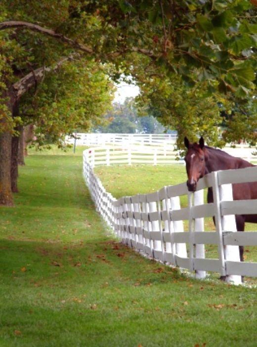 Love This Scene Beautiful Fence Beautiful Green Pasture