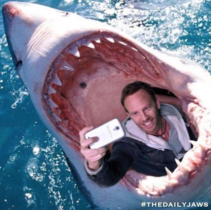 IT'S OFFICIAL! Selfies are now a bigger cause of death in the world than shark attacks. Shark attacks are extremely rare: only about 5 people die from them every year around the globe. By comparison, there have already been 12 confirmed cases of people accidentally getting killed while trying to take a selfie.