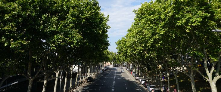 View of a tree-lined street in Barcelona, Spain.