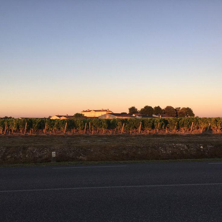 Levé de soleil sur les vignes à Beychevelles