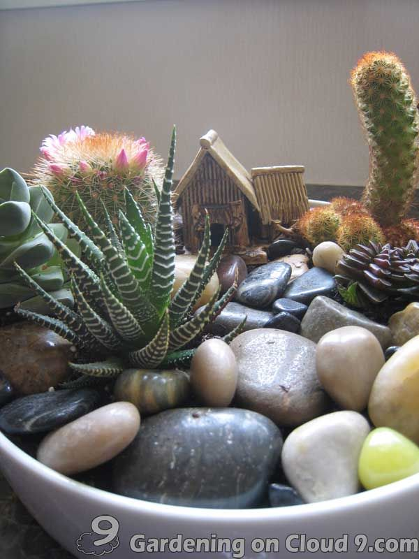 Superb Tabletop Garden   Cactus Garden