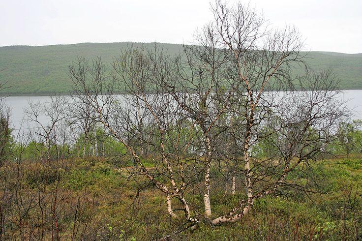 By Irmako | At Pulmankijärvi