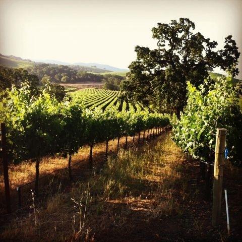 Kenwood Winery Sonoma CA