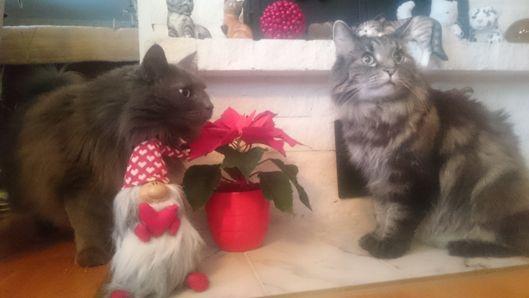 En rar julbild med killarna från Katt4you.se som önskar God fortsättning!