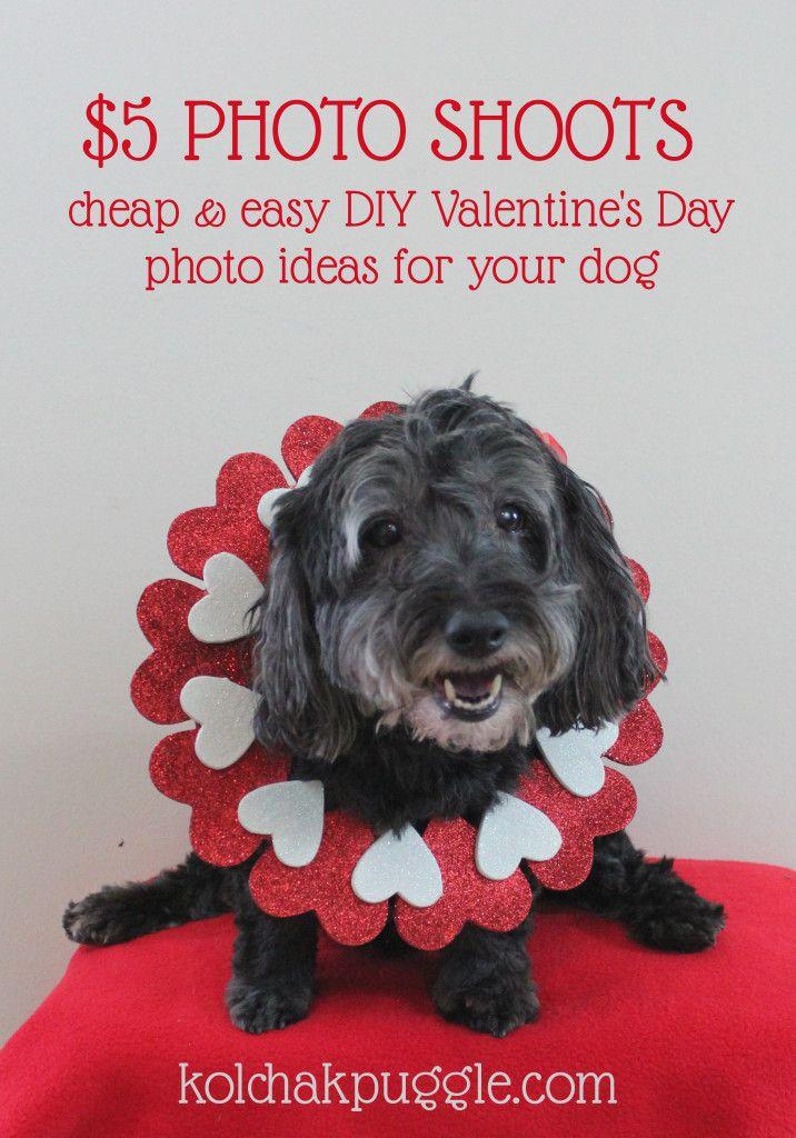 5 Photos Shoots Easy Diy Valentine S Day Dog Photos