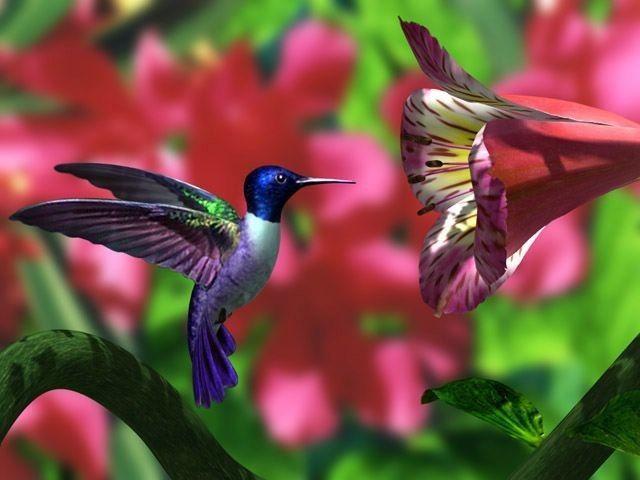 #luxurioushair #colibri #flower #amazingworld