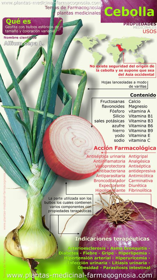 Propiedades de la cebolla. Infografía - Farmacognosia. Plantas medicinales
