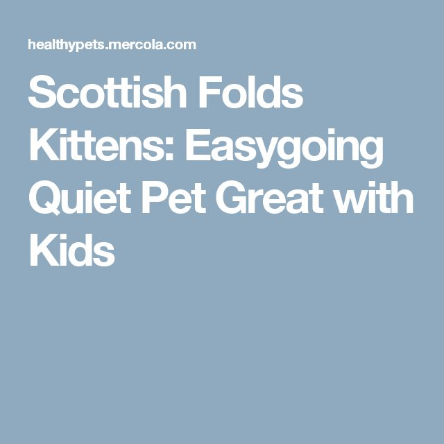 Scottish Folds Kittens: Easygoing Quiet Pet Great with Kids