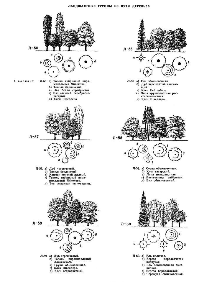 Композиции из деревьев