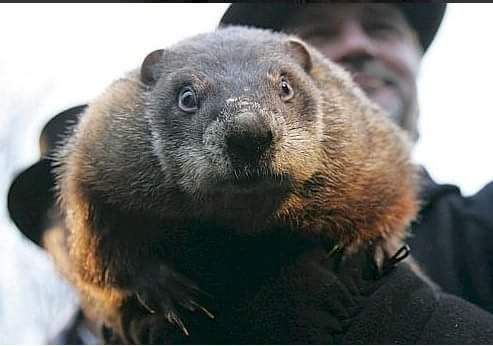 """Well folks it's """"official"""", only 4 more weeks of winter according to Punxsutawney Phil. I'm not buying it. How in the world did he NOT see his shadow? Clear bule skies at 7:30 AM in Central PA. From all us"""