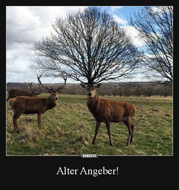 Alter Angeber!   Lustige Bilder, Sprüche, Witze, echt lustig