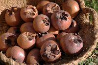 El eco del Palancia: Pacharanes... y otros frutos silvestres olvidados.