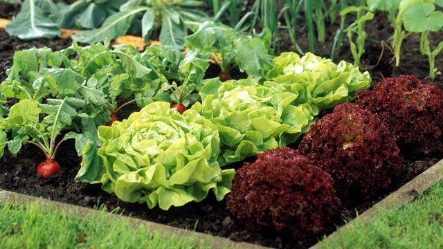 Gemüsebeet anlegen: Planung und Umsetzung