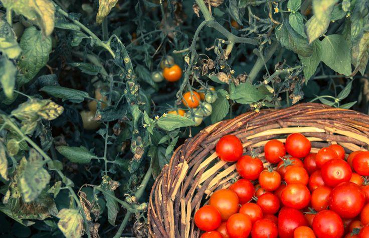 Huerta Organica