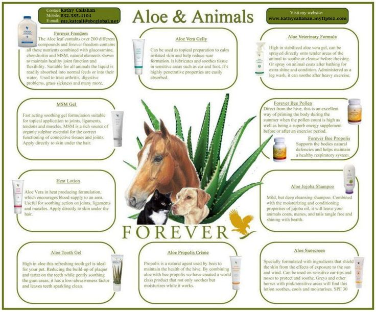 The healing power of aloe for your animals!   Each of these products can be found on my website.  Thank you for visiting!!  www.myflpbiz.com/feelgreatforever