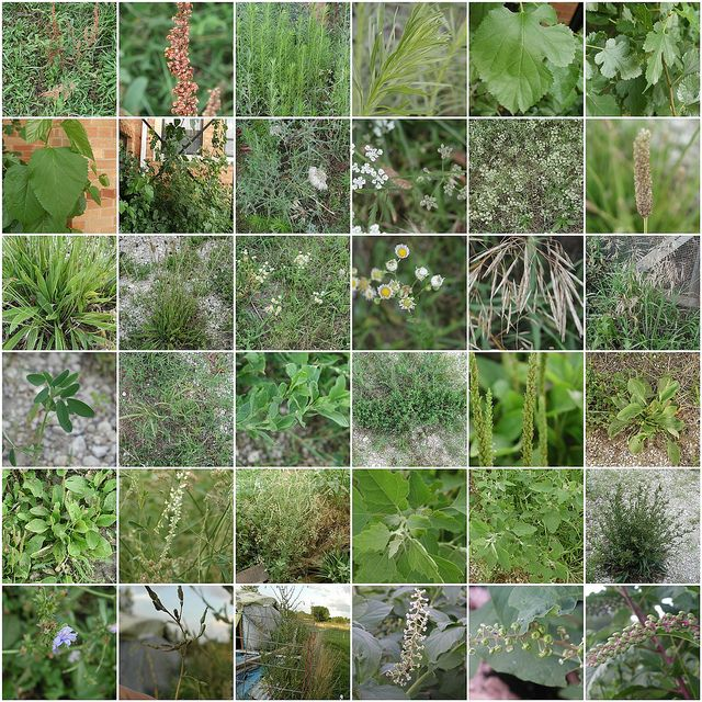 205 Best Weeds Images On Pinterest Mobile App Mobile Applications And Killing Weeds