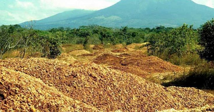 The juice company dumped 12,000 tons of orange peels in the area, and were stunned when they returned 16 years later.