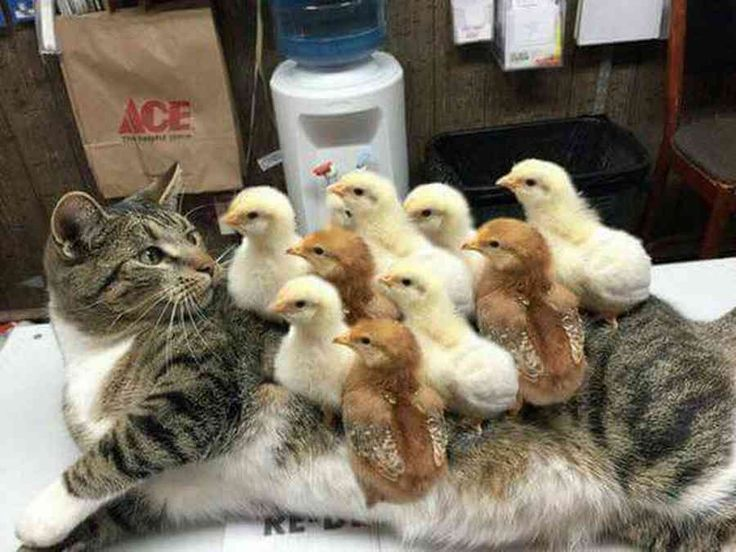 見なきゃ損!Twitterで見かけた動物たちの衝撃的な光景 25選 - ペット日和