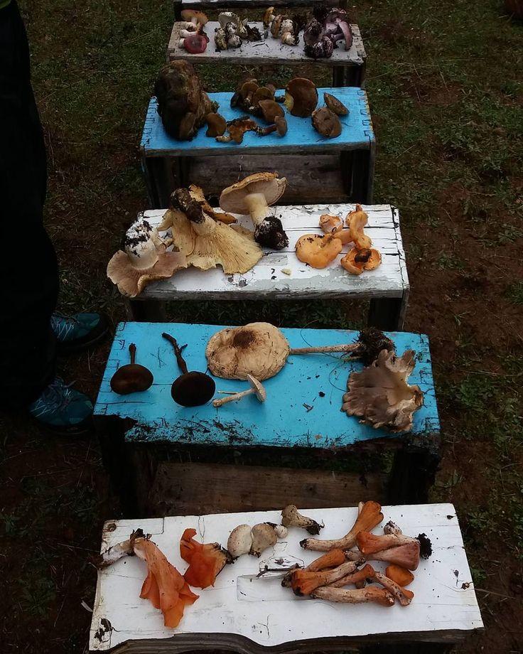 #μανιτάρια #mycooperativa #παρνασσός #mushrooms #fungi #lightgear #δάσος #νοέμβριος