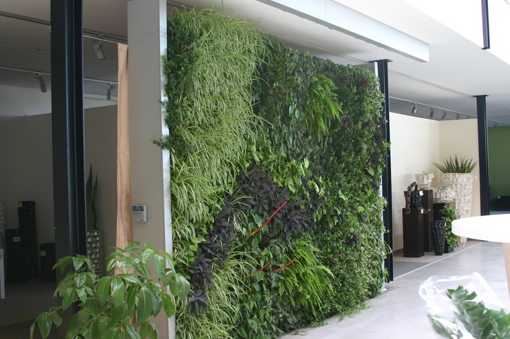 Get a Green Wall installed by Green Air and impress your staff, clients and friends