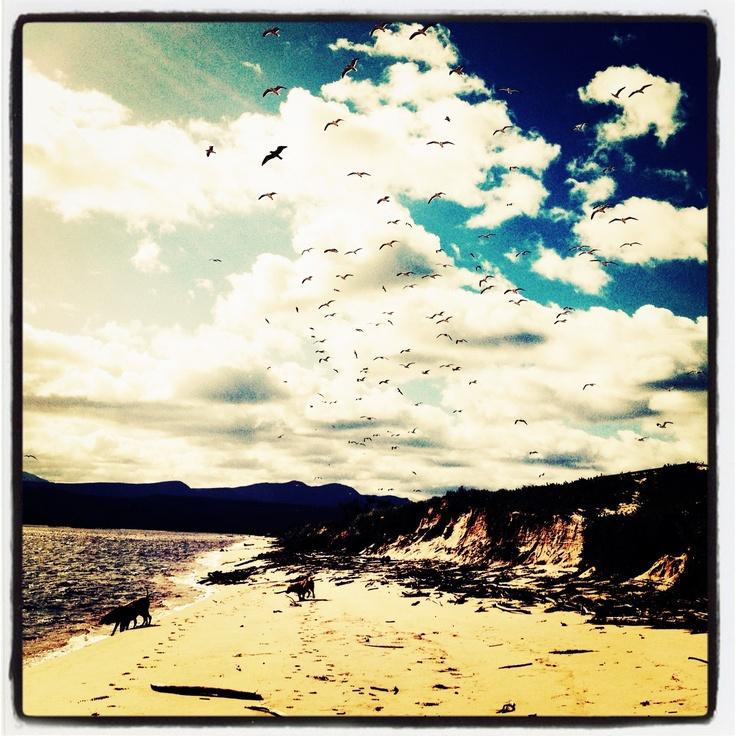 Flight❤Keurboomstrand #beach #plettitsafeeling www.eventsandtents.co.za