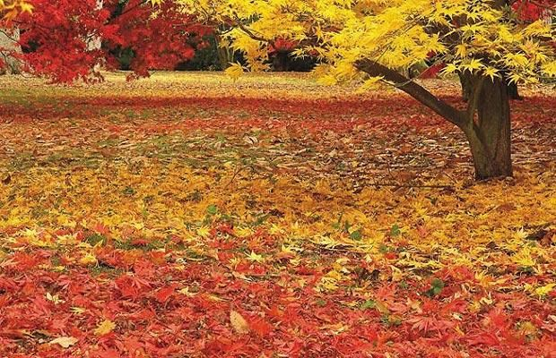 Free Gold Leaves Of Autumn Nature Screensavers For Mac OS X