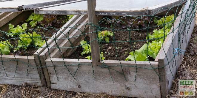 Lorsque l'on veut effectuer des semis de plantes frileuses et que l'on ne dispose ni de serre, ni de véranda ou que l'on ne veut tout simplement pas occuper l'une des fenêtres de la maison, le recours au semis sur couche chaude est une alternative intéressante, facile à réussir et économique. Comment s'y prendre ? http://www.jardipartage.fr/semer-couche-chaude/