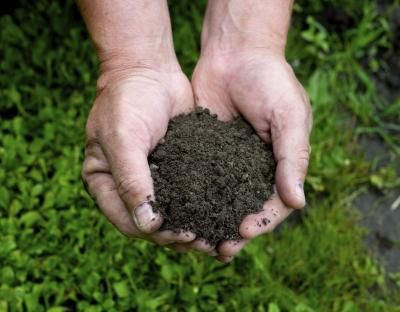 What Is Humus Soil? - good tips for gardening.  Other related useful information can be found in 'You May Like' section at the side