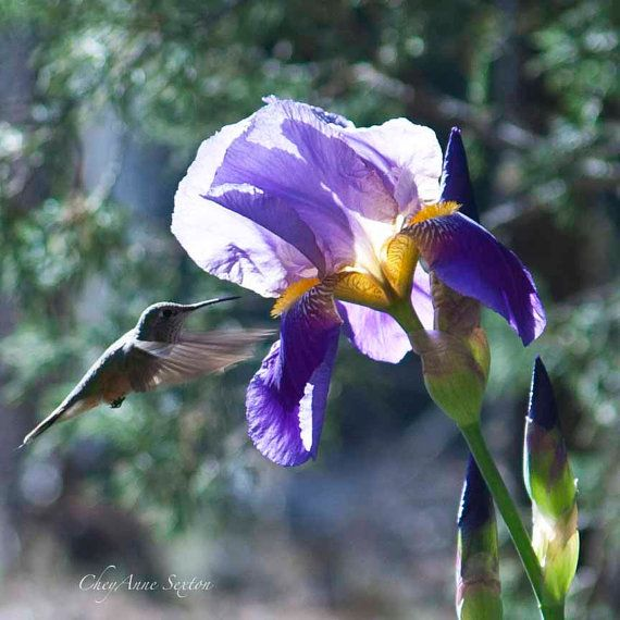 Humming Bird Education IPO - top10stockbroker.com