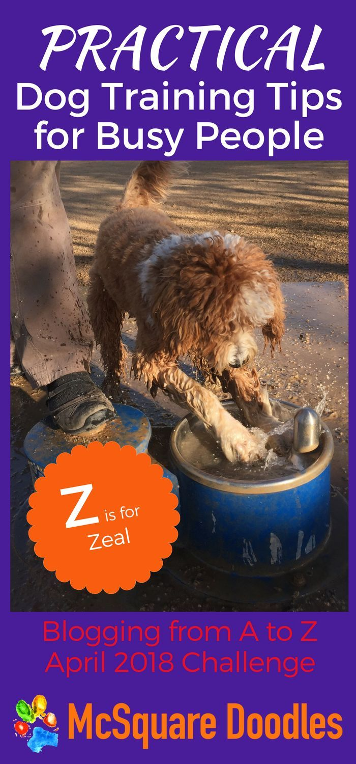 Amiable Centralized Dog Training For Agility Complete Our 5 Minute