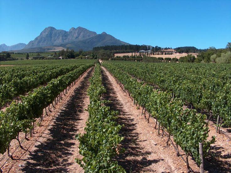 Glen Carlou, Wine Estate Paar, SA