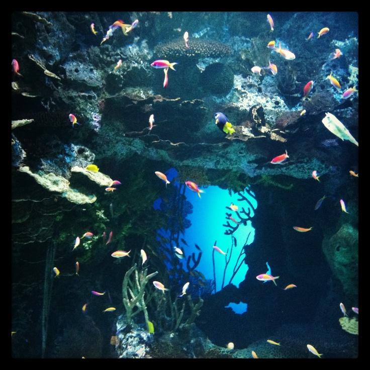 74 Best Images About Georgia Aquarium Atlanta On