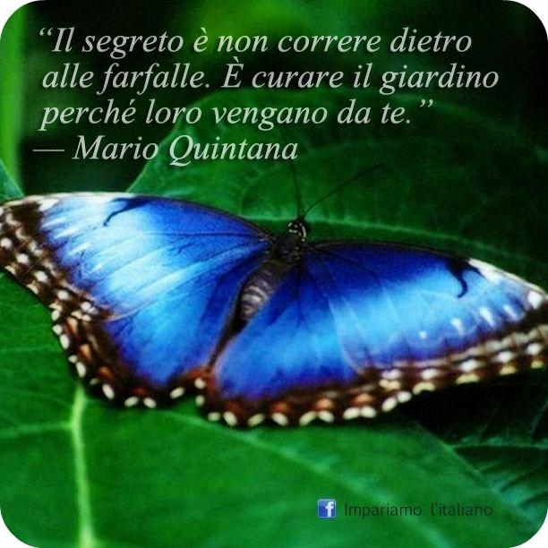 Il segreto è non correre dietro alle farfalle. È curare il giardino perché loro vengano da te.
