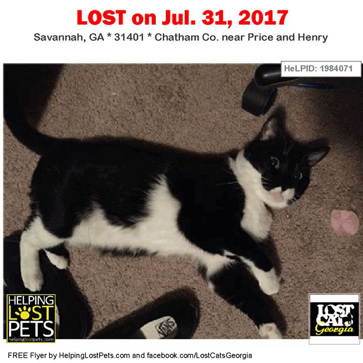 Lost Cat - Savannah GA - July 31 2017 Closest Intersection - Price and Henry County - Chatham  #LOSTCAT #Trooper #Savannah (Price & Henry)  #GA 31401 #Chatham Co.  #Cat 07-31-2017! Male #Unknown Black / White/  CONTACT Phone: (772) 284-5318  More Info Photos and to Contact: http://ift.tt/2kLvDRy  To see this pets location on the HelpingLostPets Map: http://ift.tt/2wRfgVa  Let's get Trooper home! #lostcatsgeorgia  #HelpingLostPets
