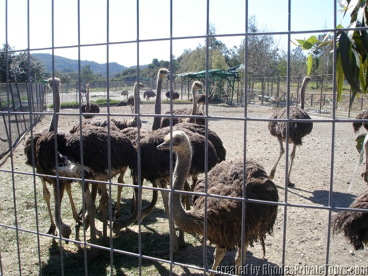 The west coast of Rhodes Island - Ostrich Farm and Zoo