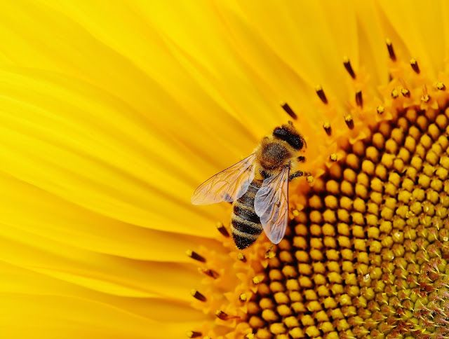 155 best bees images on Pinterest Bees, Beekeeping and Natural - fresh apiary blueprint examples