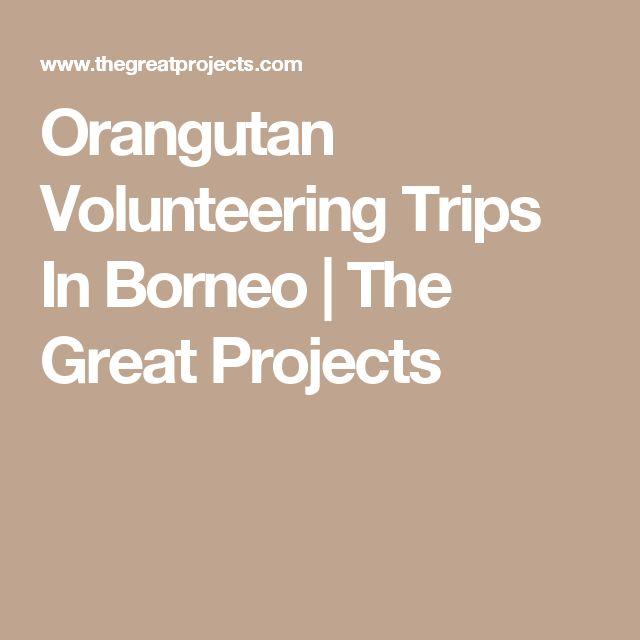 Orangutan Volunteering Trips In Borneo   The Great Projects