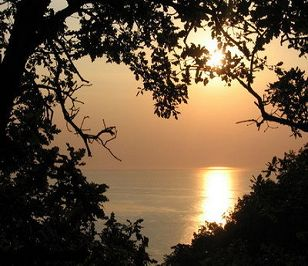 love sunset heart opening through trees