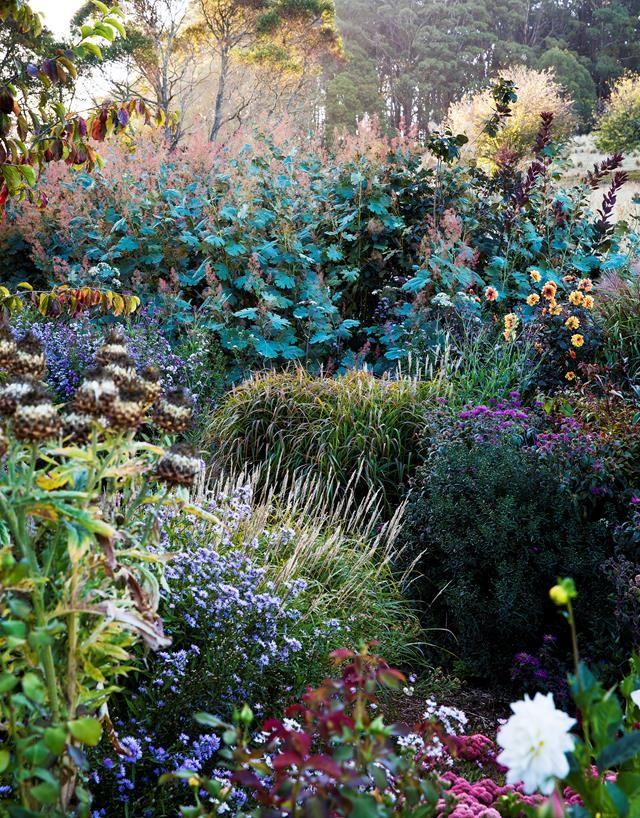 Ein blühender mehrjähriger Garten in NSW