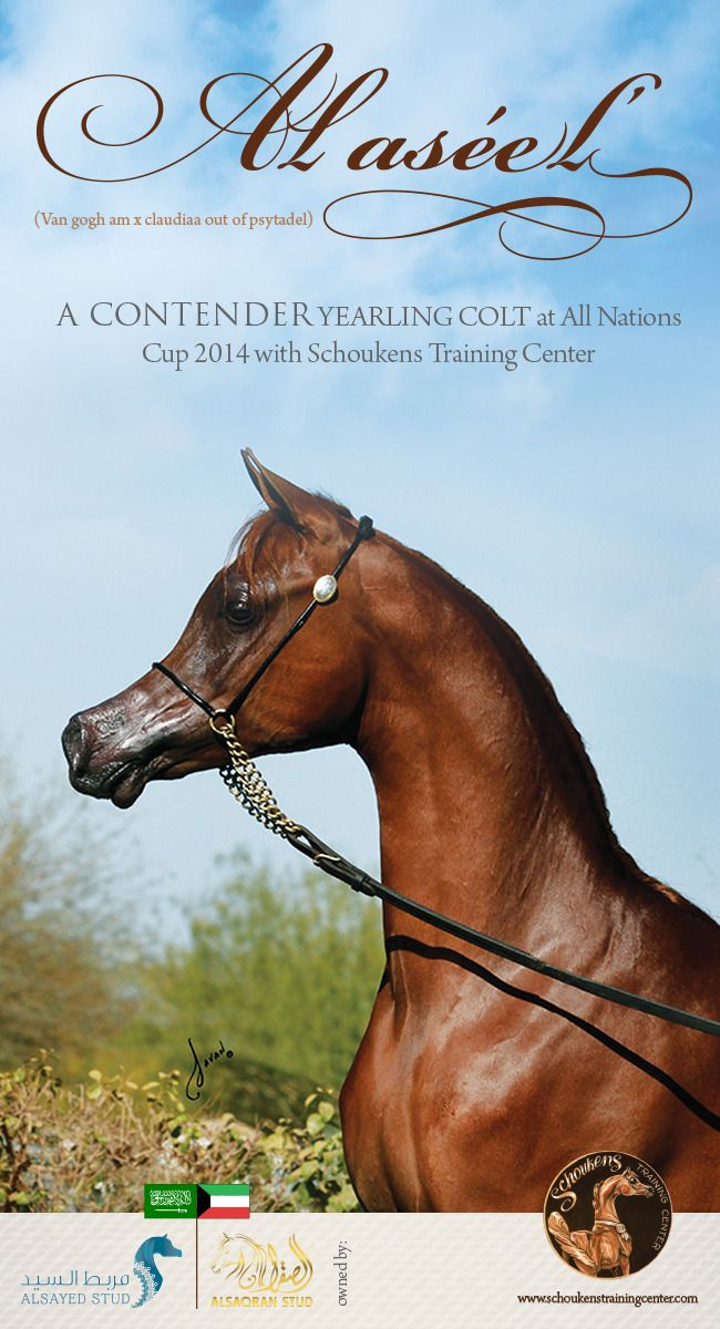 His Journey will begin in Aachen, ALASEEL :: Arabian Horses, Stallions, Farms, Arabians, for sale - Arabian Horse Network, www.arabhorse.com