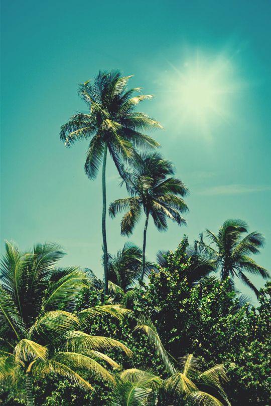 """italian-luxury: """"Palm Tree Oasis by Kasper Nymann """""""