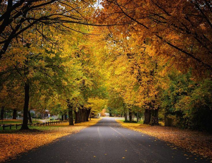 A Golden Road, Bright, Victoria, Australia by Ading Attamimi on 500px