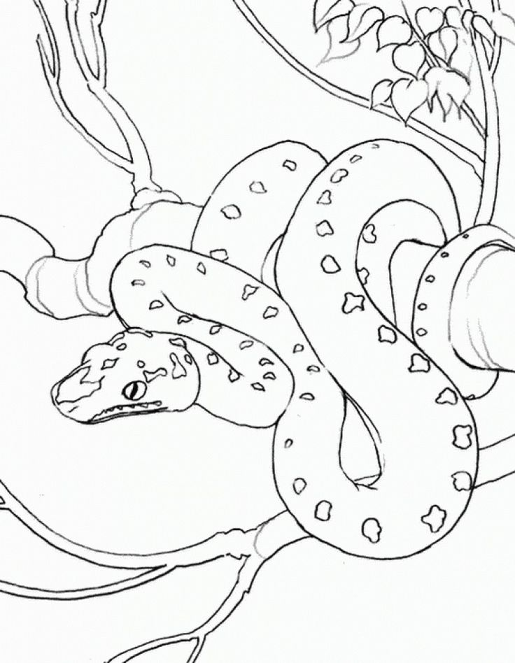 realistic snake on a tree coloring page - Coloring Pages People Realistic