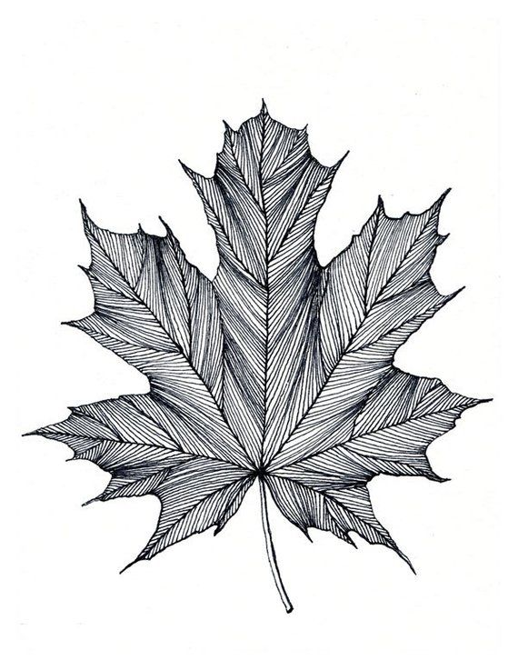 Maple Leaf Print of original Black or Green Pen and Ink Drawing