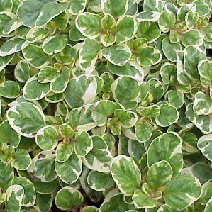 Las 25 mejores ideas sobre plantas a pleno sol en for Plantas de jardin resistentes al frio