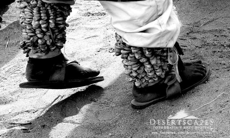 Danzante indigena sonorense. El material en los pies del danzante es el capullo de mariposa lo limpian y le ponen piedrecillas para que hagan ruido como cascabeles , indispensables en las danzas regionales y en el ajuar de chapayeca o fariseo en cuaresma.