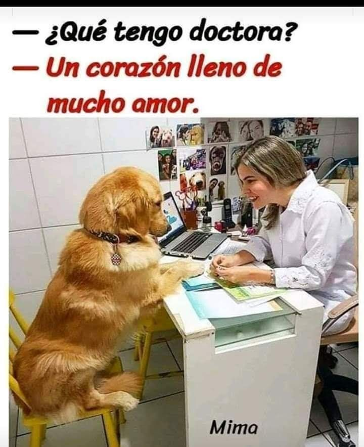 Doctora Dog Memes Dogs And Kids Funny Dog Memes