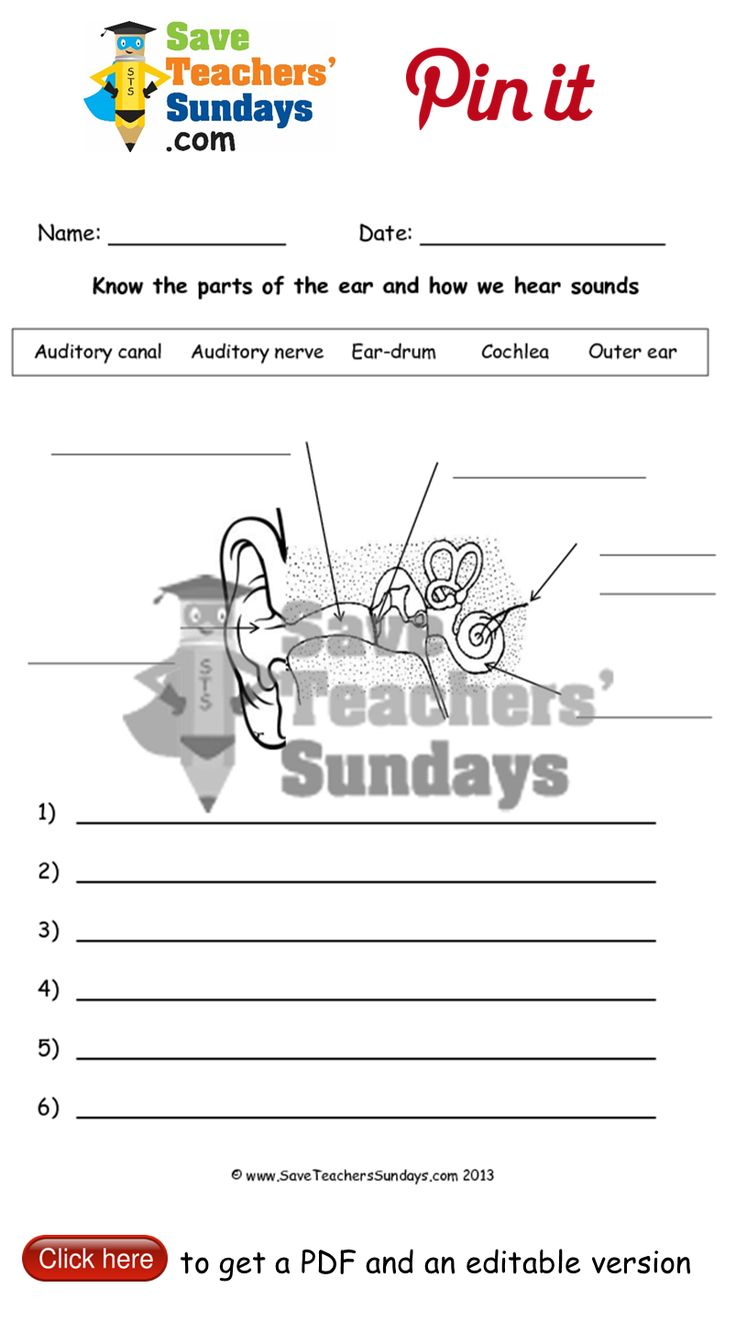 The ear and hearing worksheet. Go to http://www.saveteacherssundays.com/science/year-4/372/lesson-3a-the-ear-and-how-we-hear/ to download this The ear and hearing worksheet. #SaveTeachersSundaysUK