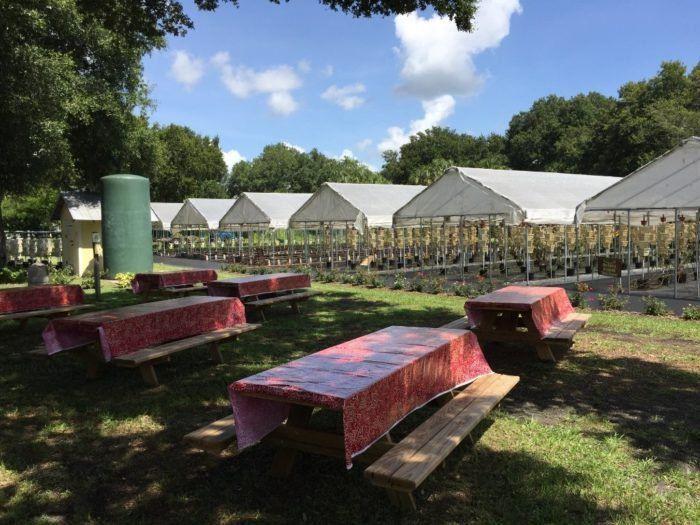 6. Buckingham Farms, Fort Myers